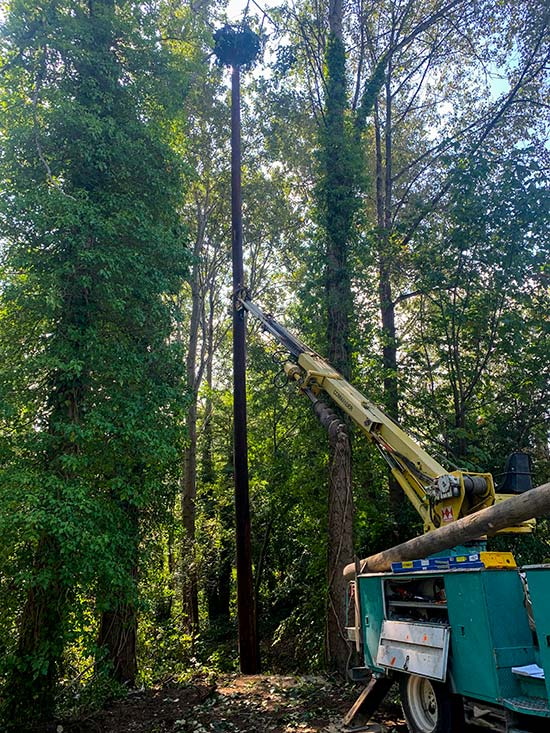 Here we are an installing an 80' pole for an eagle's nest at Vanier Park in downtown Vancouver